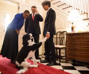 Ambassador John Berry and Mr Curtis Yee greet Consul General Cynthia Griffin, with Hapa the dog joining in!